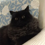 Daiblackcat