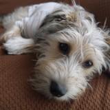 ミックス(雑種)、その他小型犬