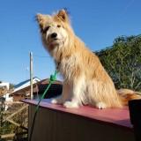 ミックス(雑種)、その他中型犬